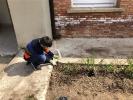 ¡Día de cebollas, Semana Santa y limpieza!_3