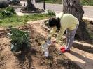 ¡Día de cebollas, Semana Santa y limpieza!_4