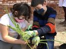 ¡Día de cebollas, Semana Santa y limpieza!_9